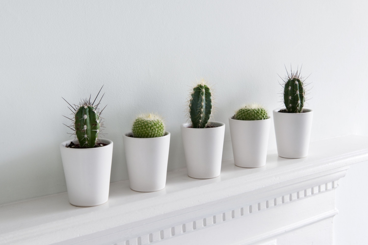 1474405755-indoor-plants-cactus.jpg